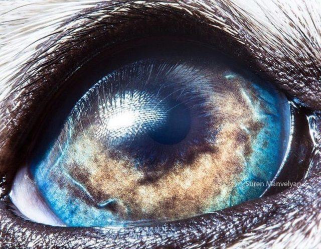 مالاموت ألاسكا |  مصور يكشف عن لقطات ماكرو لعيون الحيوانات وتبدو مبهرة |  زيسترادار