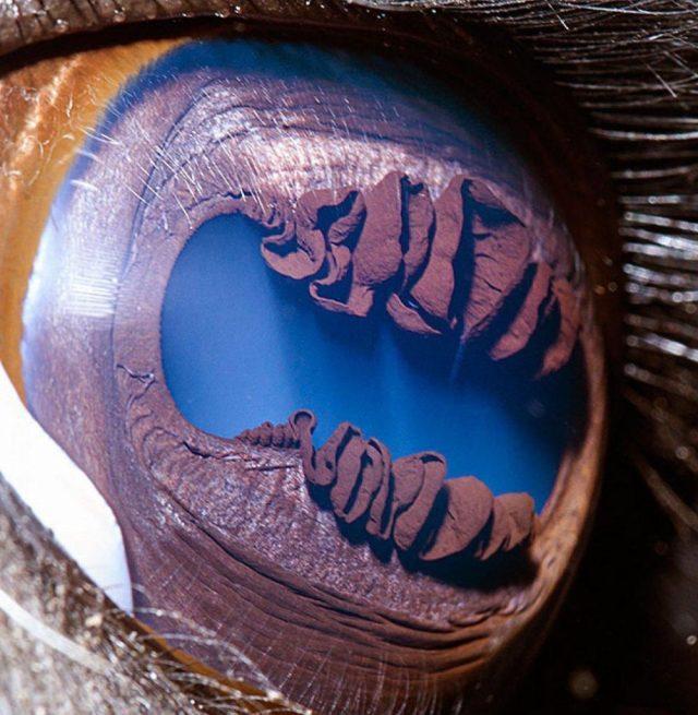 لاما |  مصور يكشف عن لقطات ماكرو لعيون الحيوانات وتبدو مبهرة |  زيسترادار