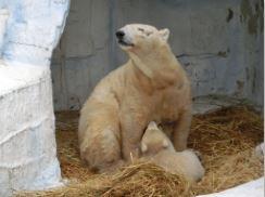天王寺動物園 シロクマ 赤ちゃん