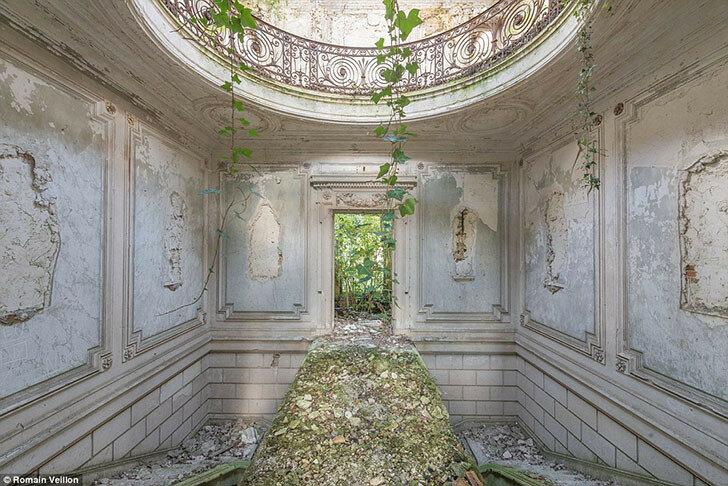Виноградник разросся и продолжает разрушать заброшенный дом во Франции.