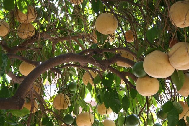 Как растут экзотические фрукты (ананасы, авокадо, оливки и другие)