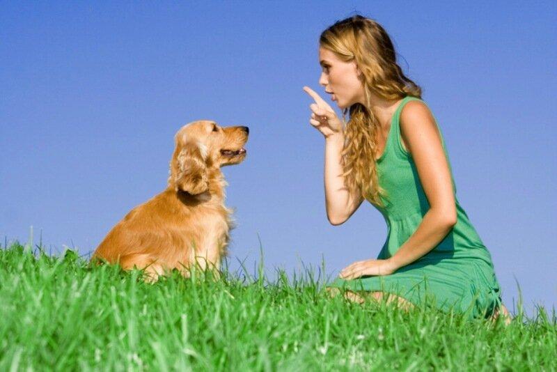 Ко мне, Мухтар! 5 главных слов, которые должна знать ваша собака