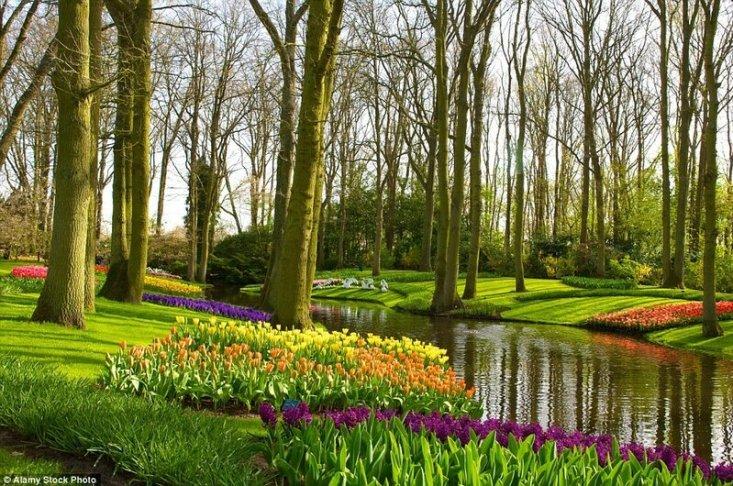 Парк цветов Кёкенхоф в Нидерландах. Несмотря на то, что парк засажен луковичными цветами, а потому пользуется популярностью у туристов только в весеннее время, он считается одним из самых красивых в мире.