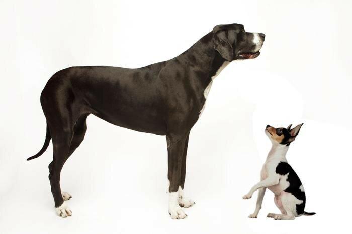 Как узнать возраст собаки по зубам и другим признакам