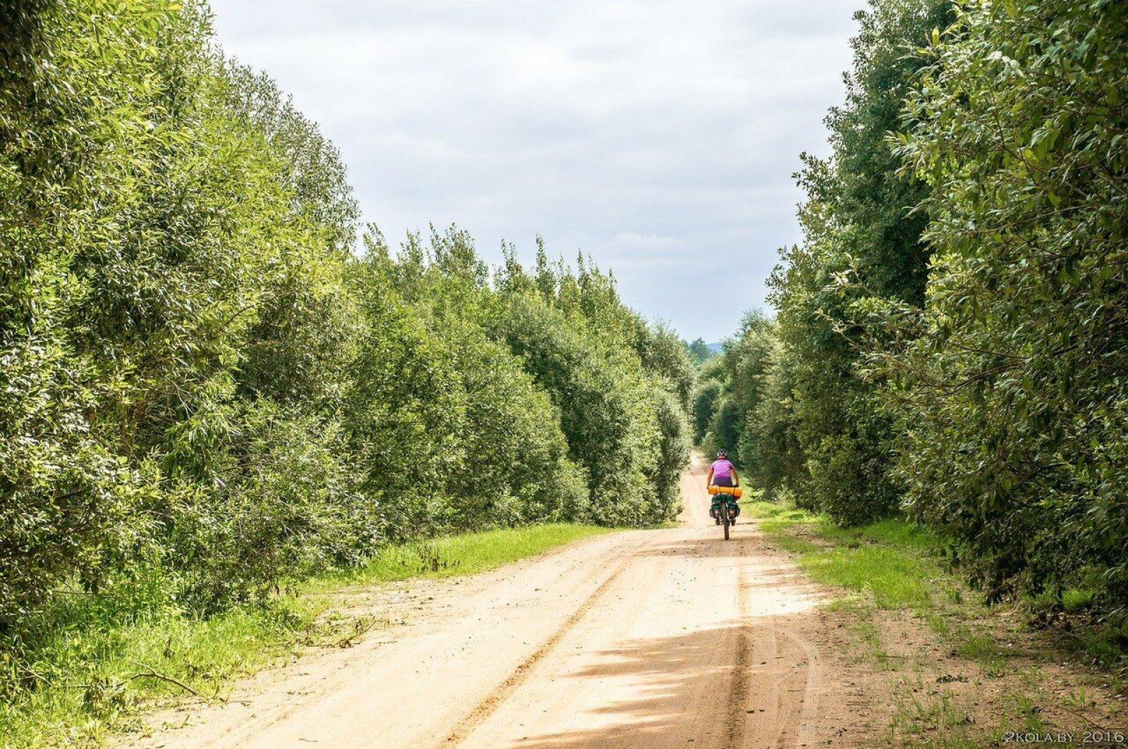 Дорога Нарочанский парк
