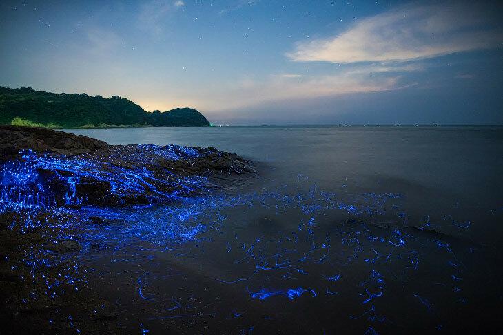 Волшебное свечение у берегов Японии, Окаяма.