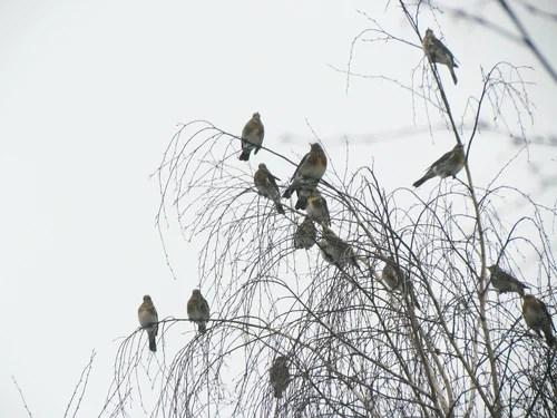 Птицы в Минске