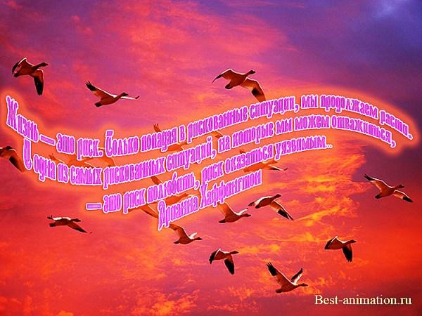 Цитаты великих людей - Что такое жизнь - Жизнь — это риск ...
