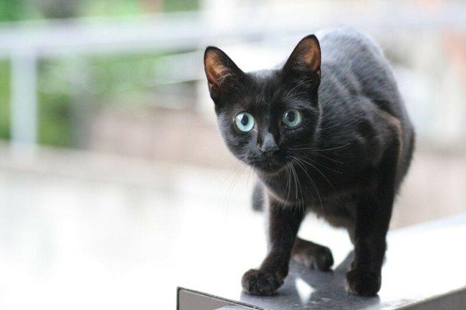 Видео: Вот что бывает, когда коты учатся у людей