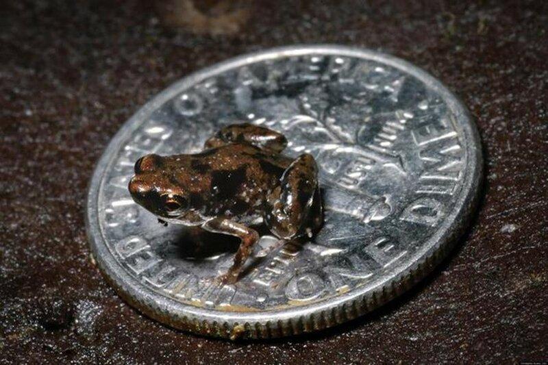 Какие самые маленькие животные в мире