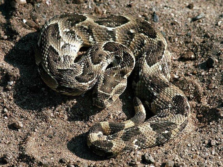 10 самых опасных змей: мамба, тайпан, кобра и другие «ползучие монстры»