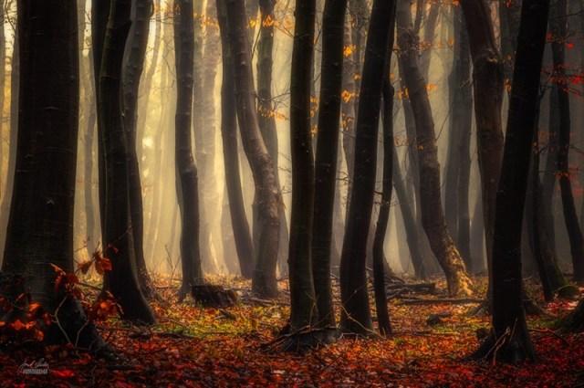 Чарівний світ Карпат: Фотографії осіннього лісу від Янека Седларжа