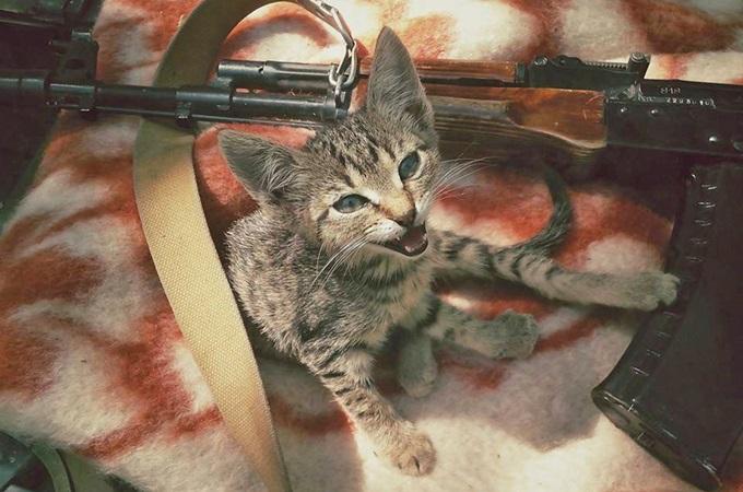 Кошки на войне. Как животные участвуют в боевых действиях