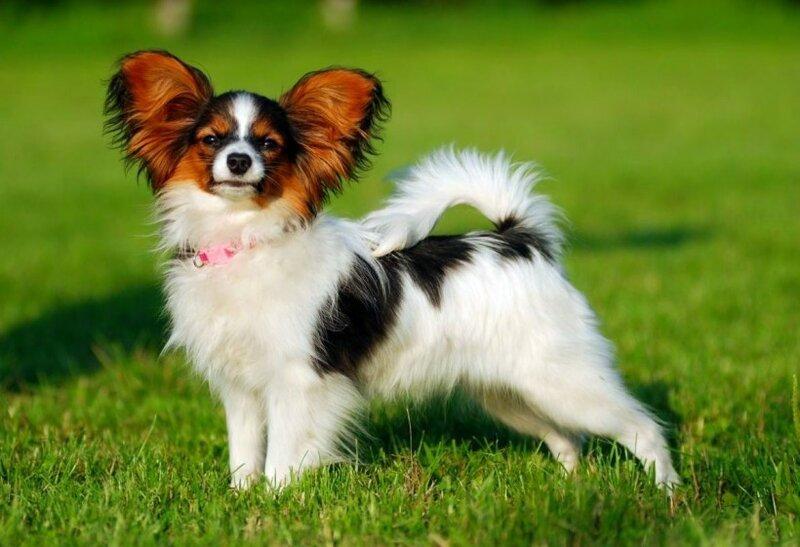 Осторожно! 10 самых агрессивных пород собак