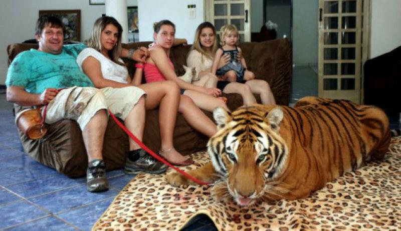 Животные и люди: самые необычные домашние любимцы