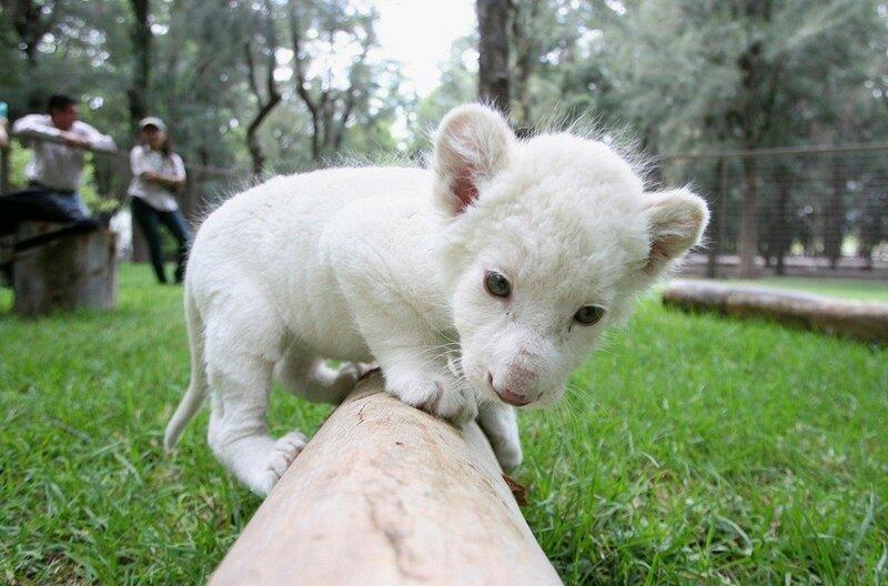 Самые дорогие животные на планете