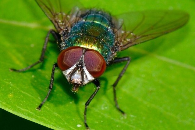 Что произойдет, если все насекомые вымрут