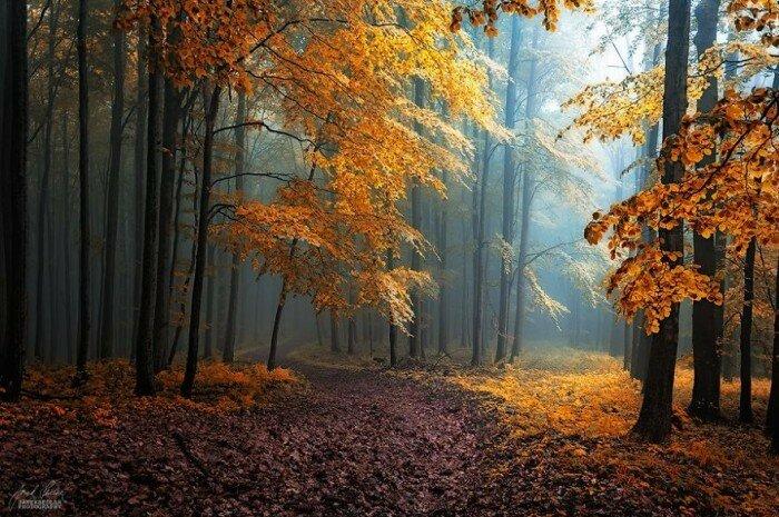 Скрыться под листьями