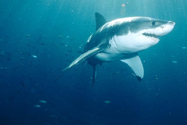 Светящаяся акула надкусывает от жертвы кусочек