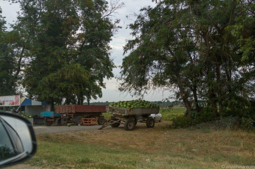Продажа арбузов, Тамань