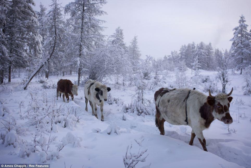 7. Здесь мало, что растет, так что люди едят мясо оленей и лошадей. В селе всего один магазин, а мес