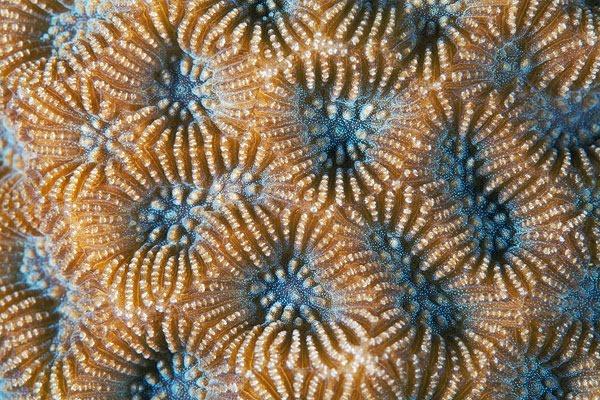 «Живые камни» Александра Семёнова. Паттерны из кораллов