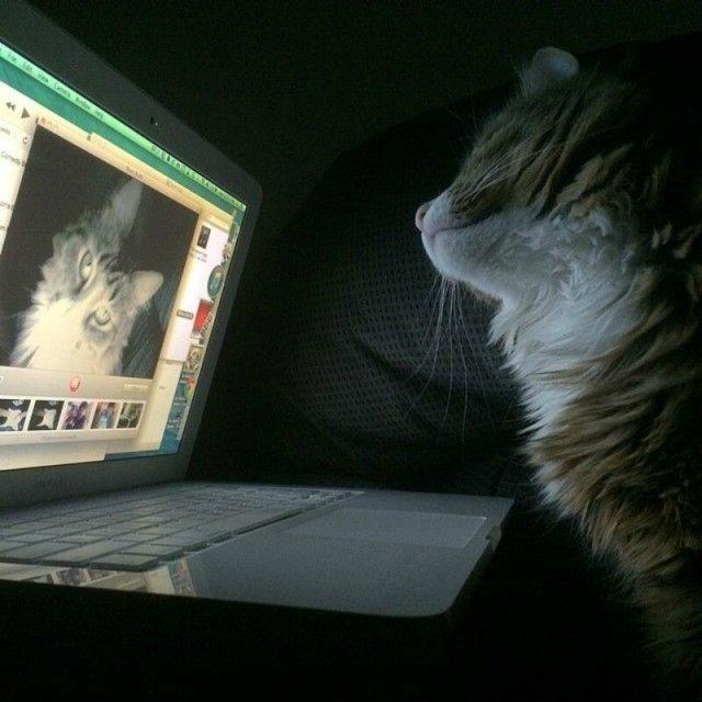Смешные фотографии забавных кошек, собак и других животных