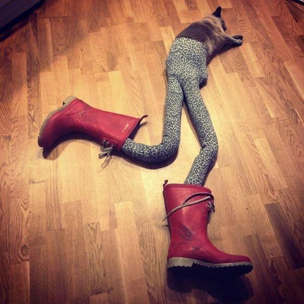 Фотографии кошки Гуччи в колготках