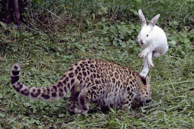 Животные, которые делают новости: самые лучшие фотографии
