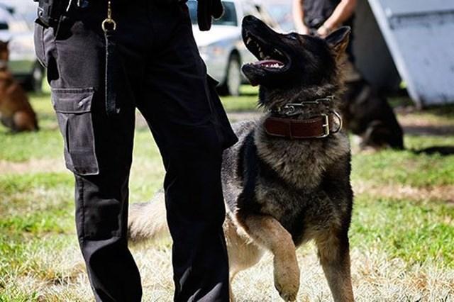 Полицейская собака Персик написала корявый рапорт в прокуратуру