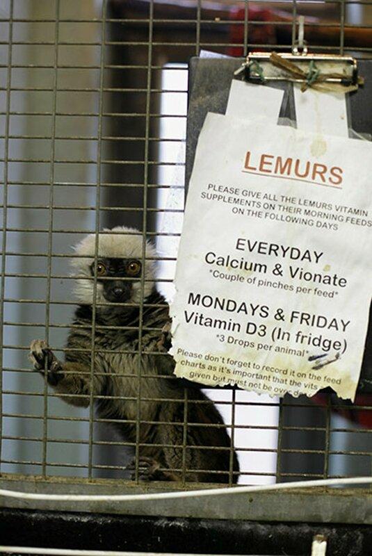 Экзотические животные в Ветеринарном центре аэропорта Хитроу, Лондон