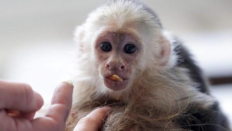 Как Джастин Бибер привез в Германию обезьянку и заплатил штраф