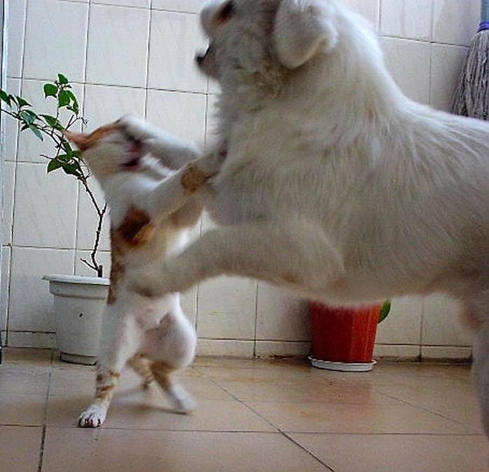 Забавные фотографии о дружбе разных животных