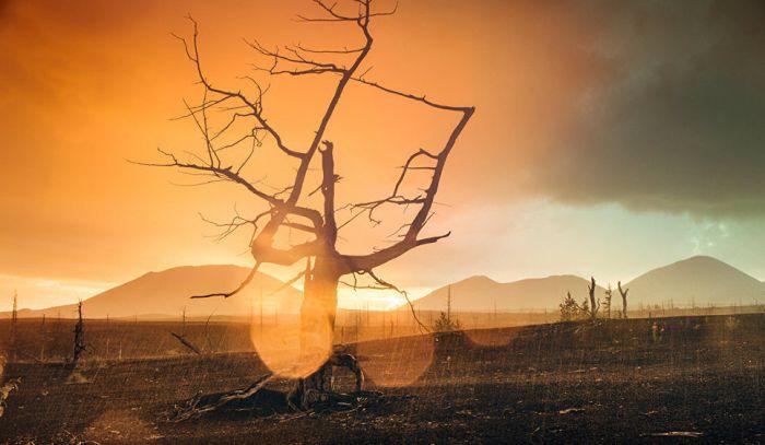 Погибшее в результате извержения 1975 года дерево даже спустя 40 лет сохранило раскидистые ветви.