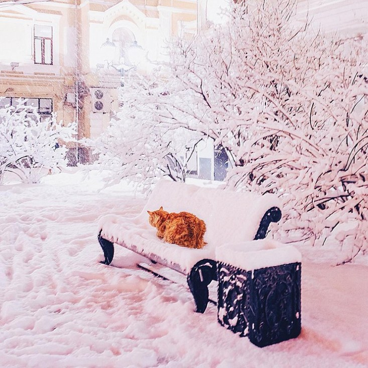 Где-то в московском дворике