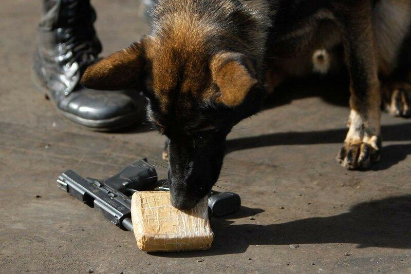 Как полицейские собаки в Бразилии готовились к Чемпионату мира по футболу