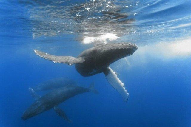 Почему киты выбрасываются на берег? Ученые обвиняют водоросли