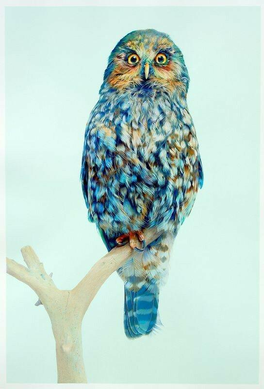 Красивая и почти реальная сова! Фотореализм— Джон Пусатери