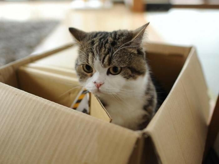Почему кошки залезают в коробки (цитата)