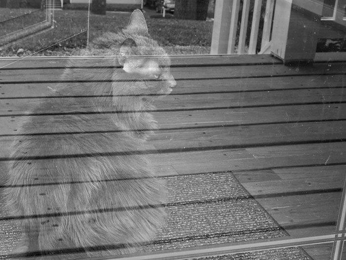 Кот-призрак