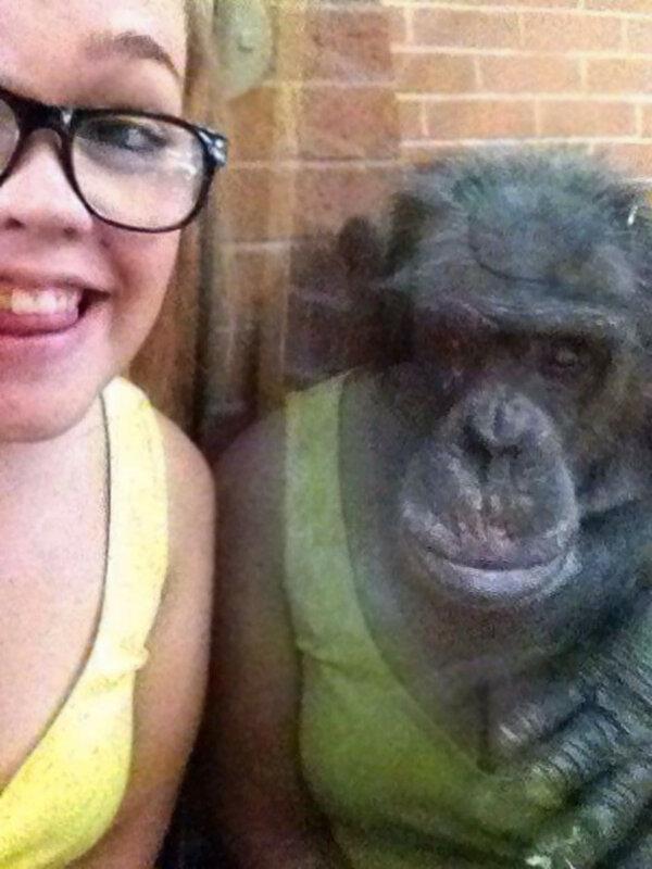 Кажется, шимпанзе приоделась