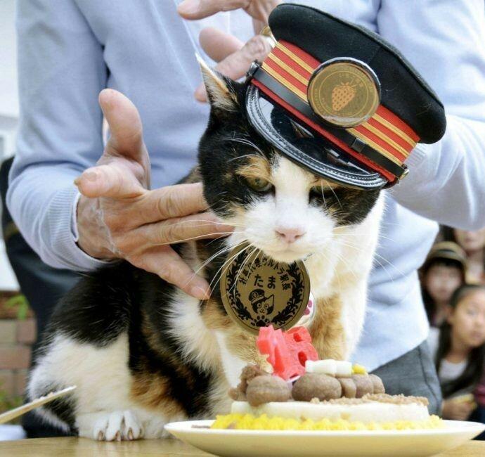 ВЯпонии напост чиновников назначают животных
