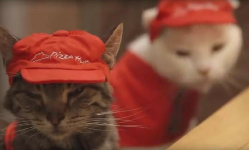 Видео: как японские коты продают пиццу