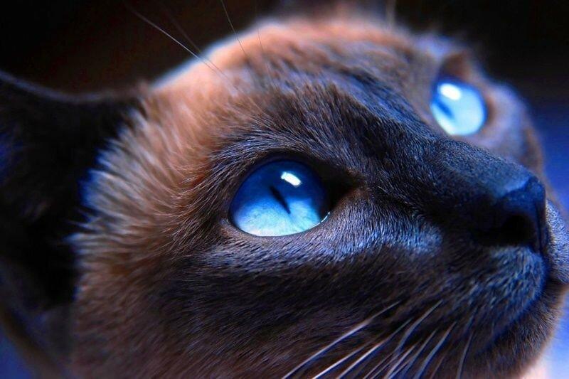 Как видят мир домашние животные