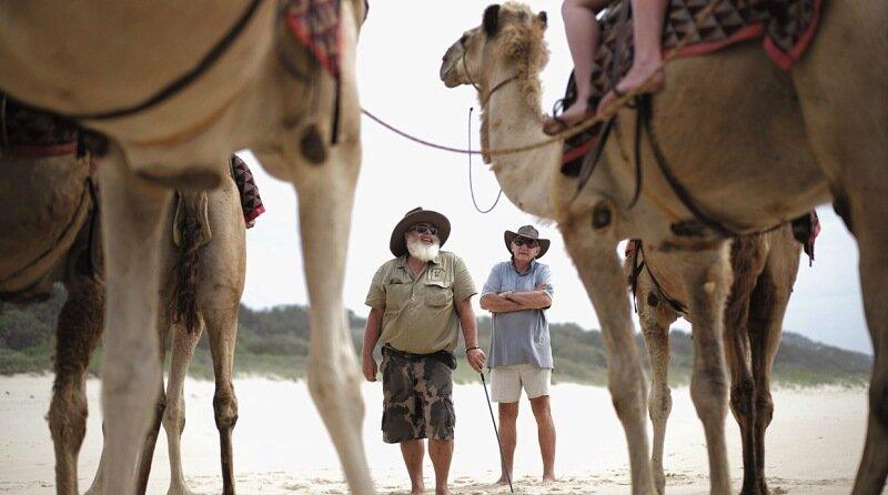 Как возбужденный верблюд растоптал людей в Техасе