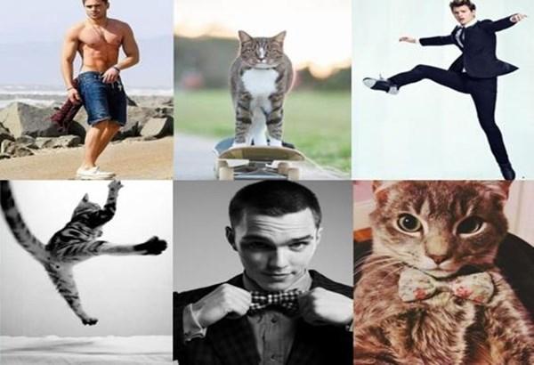 Фото: Знаменитости и похожие на них кошки
