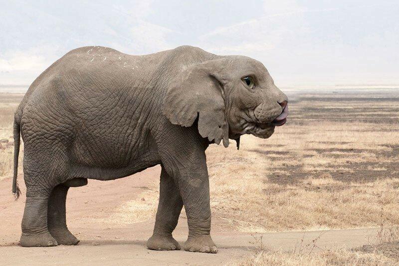 HybridAnimals: прикольные гибриды животных, сделанные в Photoshop
