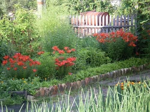Какие растения можно сажать вместе