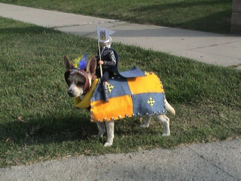 Собаки в смешных костюмах