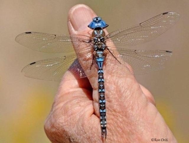 Невероятные рекорды в мире насекомых